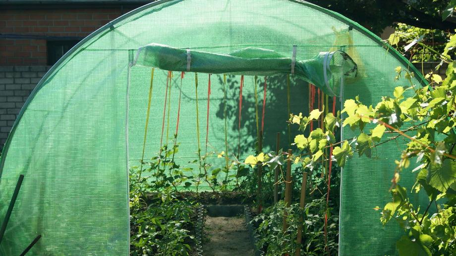 tunel ogrodowy bialy czy zielony