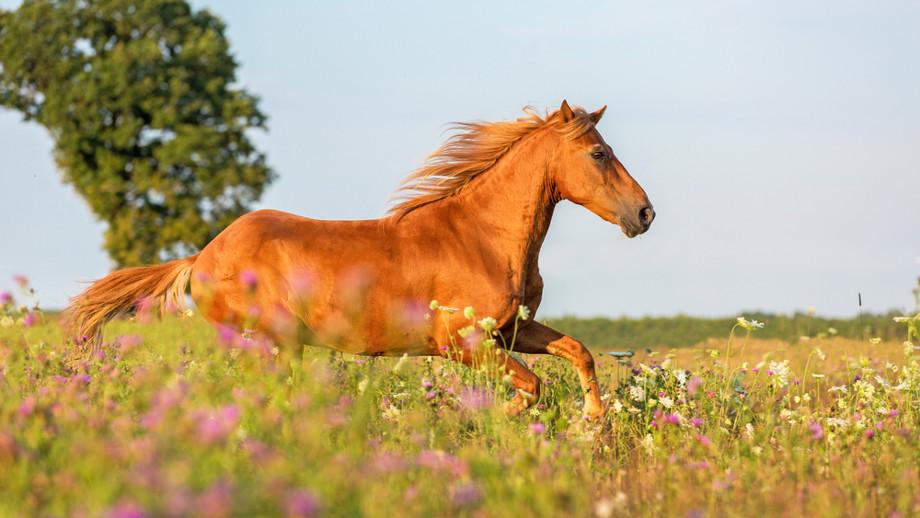 Fitoterapia – czyli co sprzyja zdrowiu i samopoczuciu konia