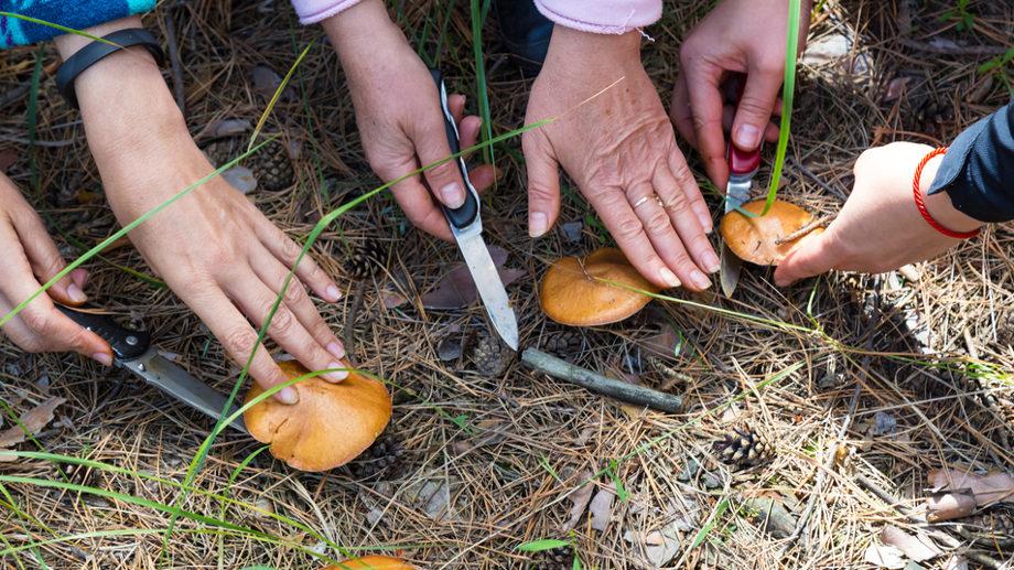 Kozik, finka czy nóż do grzybów – co się sprawdzi na grzybobraniu?
