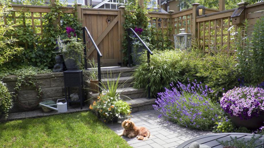 Jakie rośliny wybrać do zacienionego ogrodu?